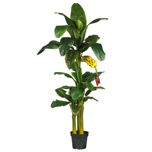 6 foot Triple Stalk Banana Silk Tree