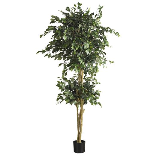 6 foot Double Ball Ficus Silk Tree