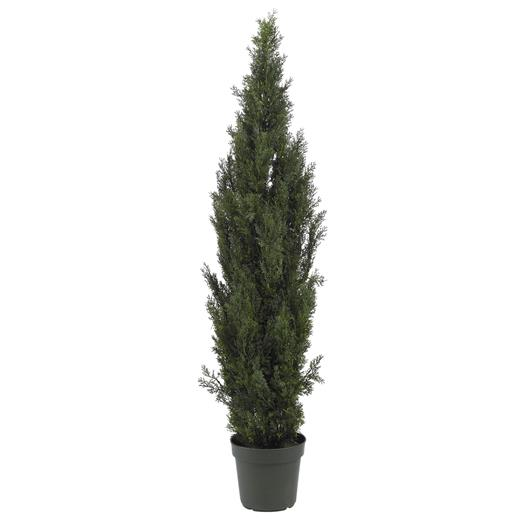 6 foot Mini Cedar Pine Tree (Indoor/Outdoor)