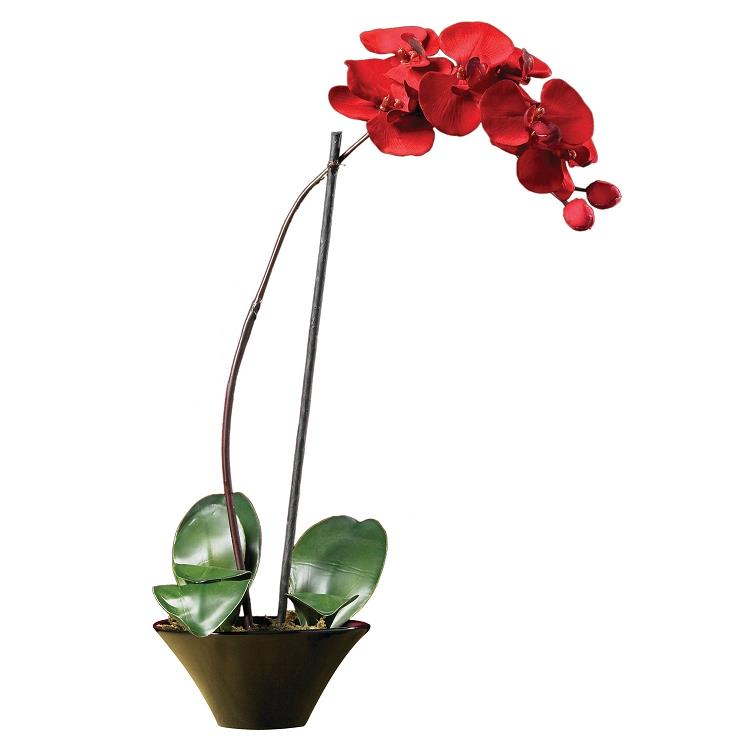 Holiday phalaenopsis orchid arrangement Christmas orchid arrangements