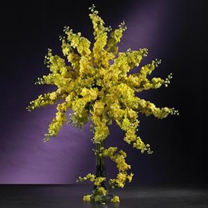 38.5'' Yellow Delphinium Stem (Set of 12)