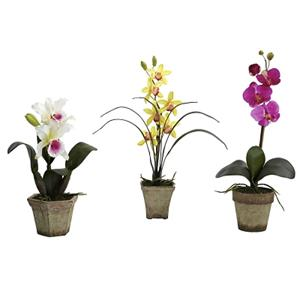 Assortment 1 Potted Orchid Mix (Set of 3)