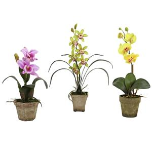Assortment 2 Potted Orchid Mix (Set of 3)