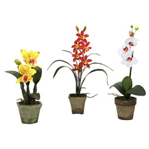 Assortment 3 Potted Orchid Mix (Set of 3)