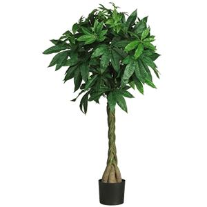 51'' Money Silk Tree