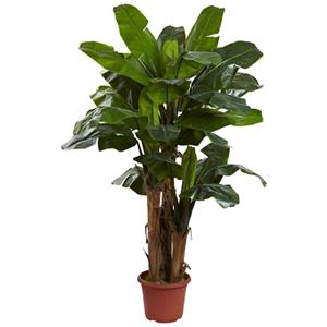 7' Giant Triple Stalk Banana Tree UV Resistant (Indoor/Outdoor)