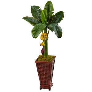 3.5' Banana Tree in Wooden Planter
