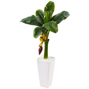 3.5' Banana Tree in White Tower Vase