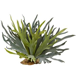 Staghorn Fern (Set of 2)