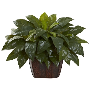 Giant Birds Nest Fern with Decorative Planter