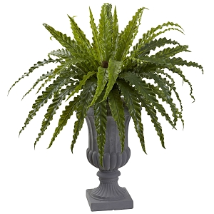 Birds Nest Fern with Urn