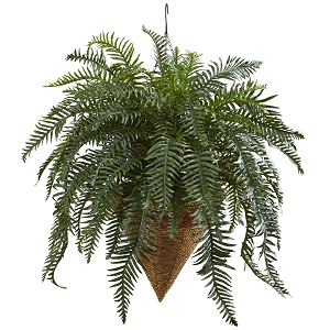 Giant River Fern with Cone Hanging Basket