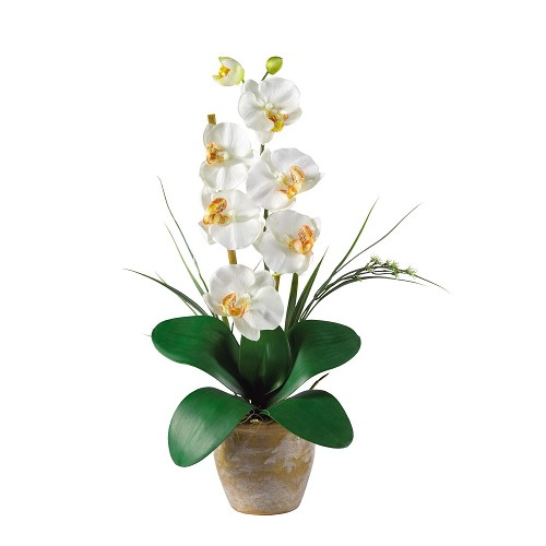 Single Stem Cream Phalaenopsis Silk Orchid Arrangement