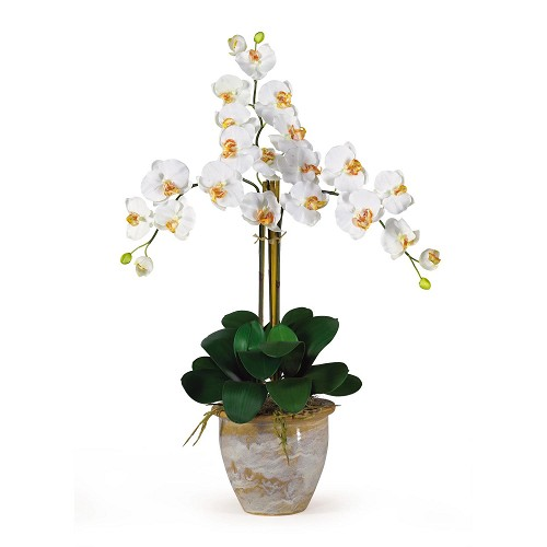 Triple Stem Cream Phalaenopsis Cream Silk Orchid Arrangement