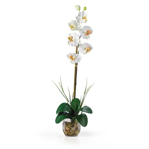 Cream Single Phalaenopsis Liquid Illusion Silk Flower Arrangement