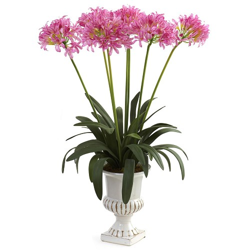 Pink African Lily w/Urn