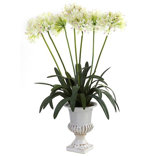 White African Lily w/Urn