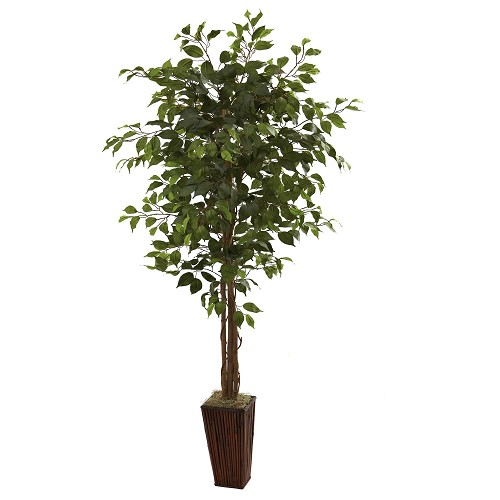 6' Ficus Tree w/Bamboo Planter