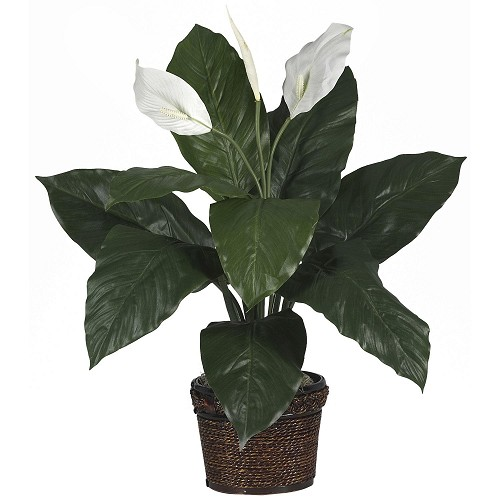 Spathiphyllum w/Coiled Rope Wicker Silk Plant