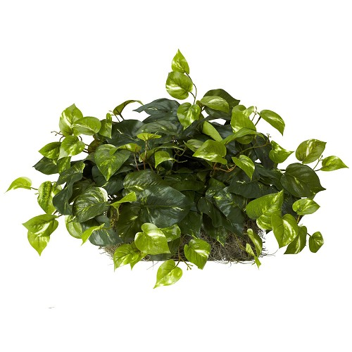 Pothos Set on Foam Sheet Silk Plant