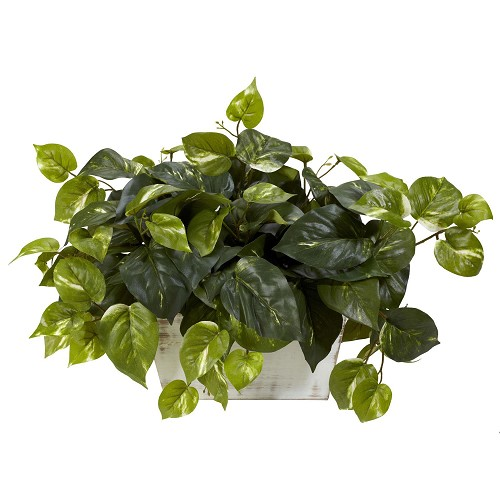 Pothos w/Whitewash Planter Silk Plant